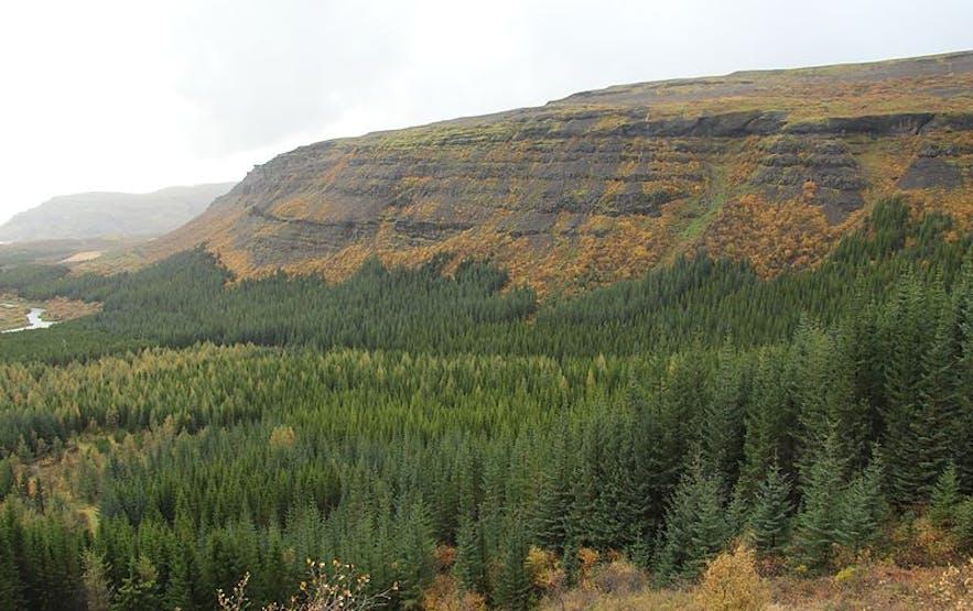 冰岛的另一处国家森林,Þjórsárdalur森林