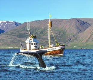 Whale Watching from Hjalteyri, North Iceland