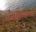 Beautiful autumn colours surrounding lake Botnsvatn.