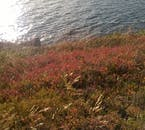Beautiful autumn colours surrounding lake Botnsvatn.