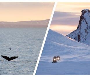일년내내 액비티비 2개) 고래 관측 및 스노모빌 투어 | 집결장소 출발