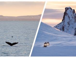 콤보투어로 빙하 위에서 스노우모빌 투어와 고래관측 투어를 함께 저렴하게 예약하세요.
