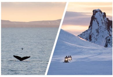 Whale Watching & Snowmobiling Tours   Meet on location