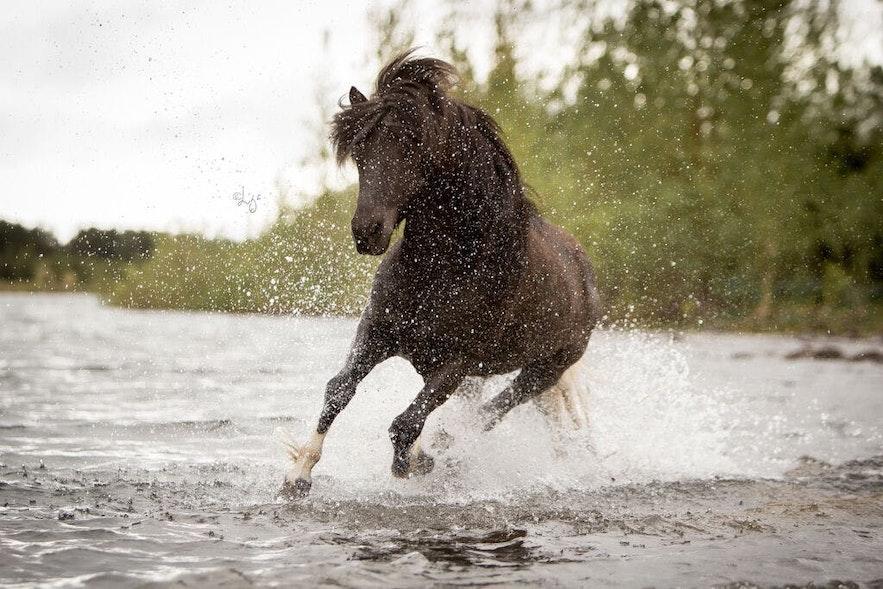 Les balades à cheval sont pour les cavaliers débutants ou confrmés