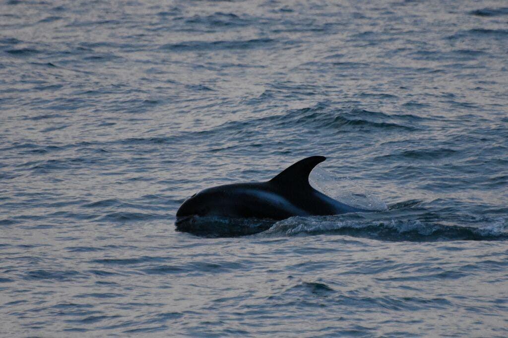 팍사플로이만을 항해해가면서 고래를 관측합니다.