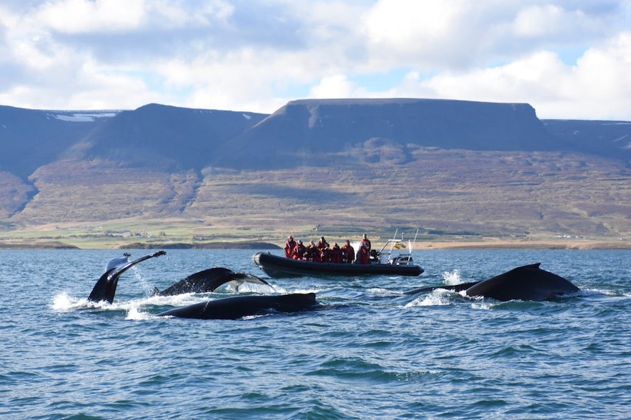 Whale watching is one of the most popular day tours across the country.