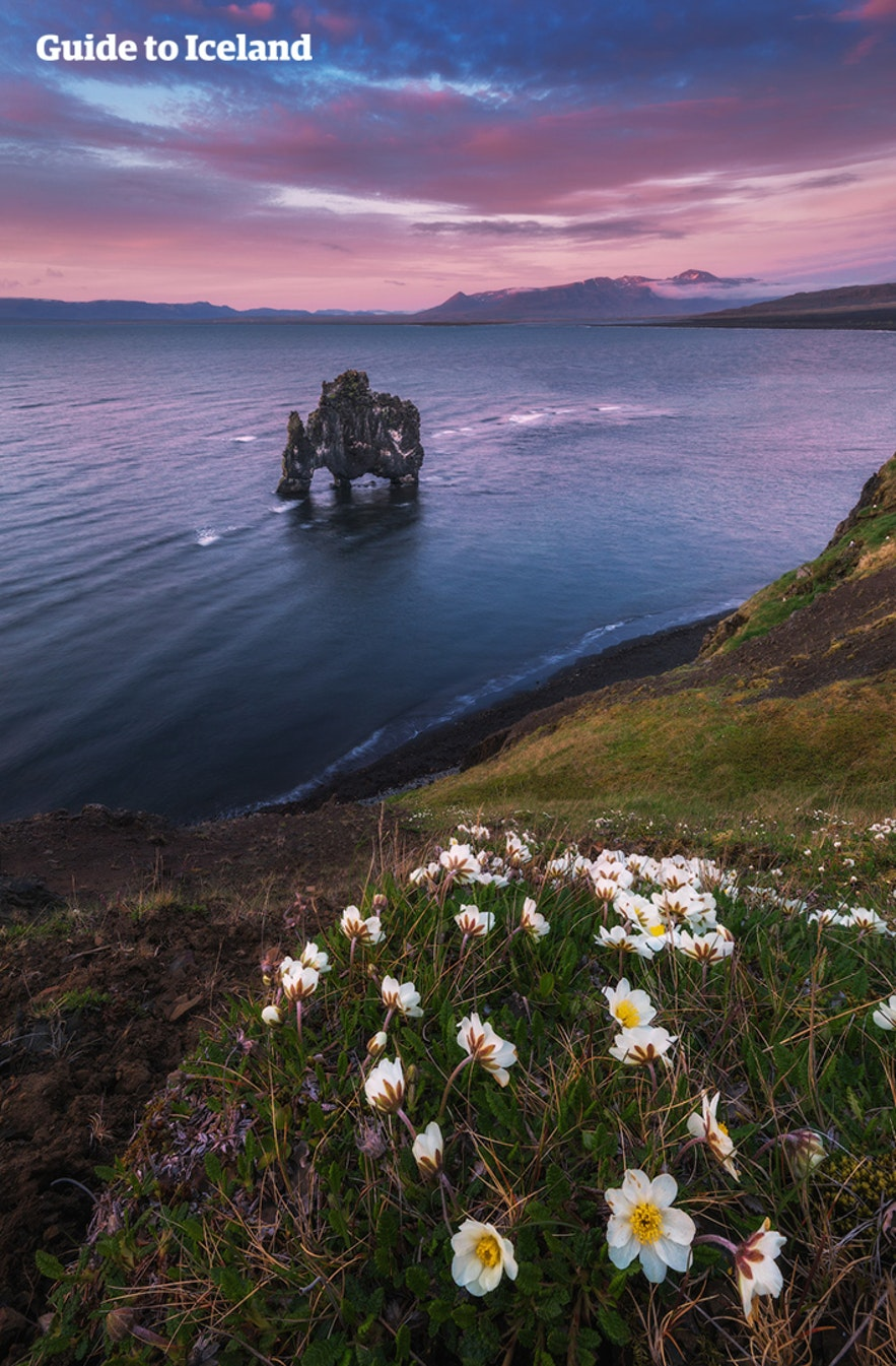 """Hvítserkur, otherwise known as the Troll of Northwest Iceland, is a 15 metre (49 feet) tall basalt rock stack protruding from Húnaflói Bay. The rock is a nesting ground for seagulls, shag and fulmar, making it appear constantly in motion, further enforcing the idea that Hvítserkur is, in some way, very much alive. Hvítserkur is best viewed along the eastern shore of the Vatnsnes Peninsula and takes its name from the birdlife that nests on top of it. In Icelandic, the name translates to """"white shirt"""", a nod to the colour of the bird droppings that cover the rock. Photographers tend to be drawn to Hvítserkur as a subject due to the way the sun, moon, and aurora borealis reflect off of the flat water around its distinctive form. Folklore of Hvítserkur It should come as no surprise that Hvítserkur is often referred to as a troll - most distinctive Icelandic rocks are. Folklore says that Hvítserkur was originally a troll from the peninsula, determined to rip the bells down from Þingeyraklaustur convent; trolls, unlike elves, are said to be terrified of Christianity.  The beast was so enraged and persistent that it did not notice the rising sun, and was instantly petrified for eternity in its rays.  In hindsight, like most of Iceland's folktales, it seems this one had a Christian message not so subtly weaved into it. It is likely that the story was an allusion to the people's stoic resistance to the Christianisation of Iceland, implying those who held onto the view were as stubborn, stupid, violent and wicked as trolls, and perhaps on their way to a similar fate. Iceland converted to Christianity in 1000 AD under the threat of invasion from Norway, and the transition was not easy; those who practised the religion of the Old Norse Gods were ostracised and punished for the millenium that followed. Formation of Hvítserkur The scientific community has another explanation for how Hvítserkur formed. Erosion from the cascading sea water has carved three large holes through the b"""