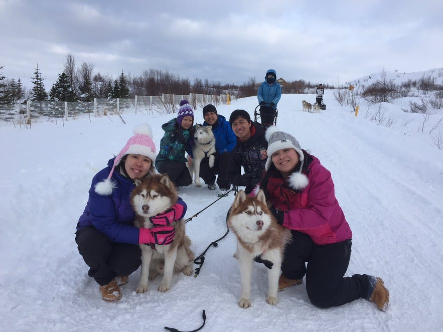 Huskies are widely beloved the world over for their strength, endurance, loyalty and good looks.