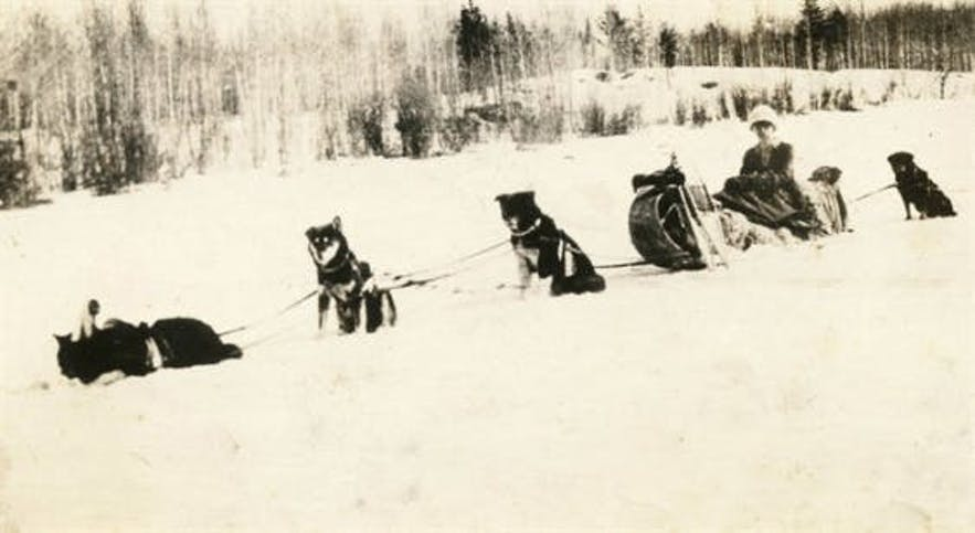 Kate Rice and her dog team. Kate was a famous female trapper, adventurer and musher who worked in Manitoba in the early 20th Century.