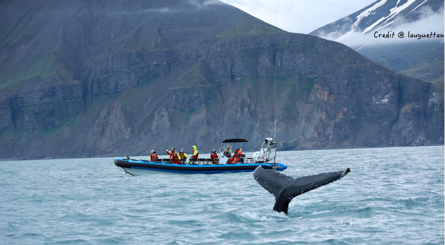 冰島胡薩維克觀鯨快艇