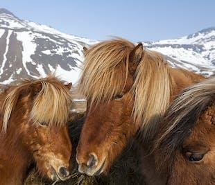 Bon plan en famille | Les animaux d'Islande | Balade à cheval et observation des animaux marins