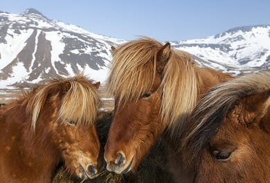 夏のセット割|乗馬体験、ホエールウオッチング、パフィンウォッチング 3in1