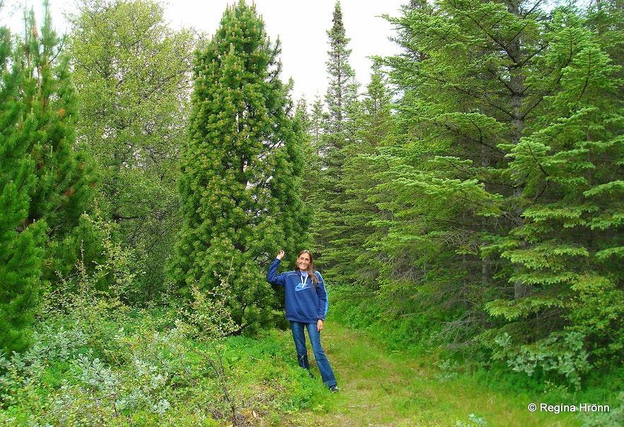 Regína in Hallormsstaðaskógur Forest in East-Iceland