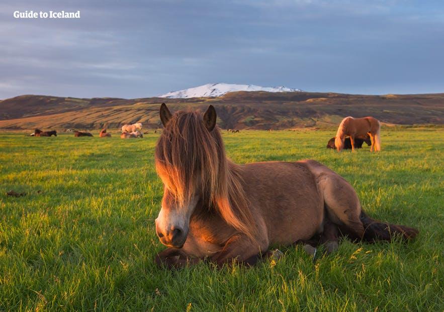 海克拉火山位于冰岛南岸,是冰岛最活跃的火山之一