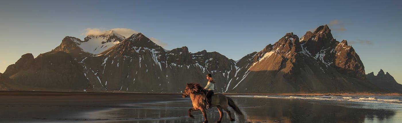 An Icelandic Horse 'tölting'.
