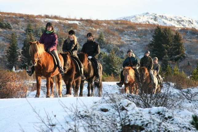 Icelandic horses are the country's most iconic animal; there are are riding tours suitable for both newcomers and experienced riders.