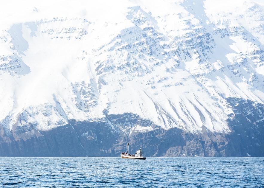 冰島觀鯨船