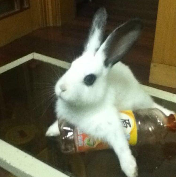 兔小锐Haru