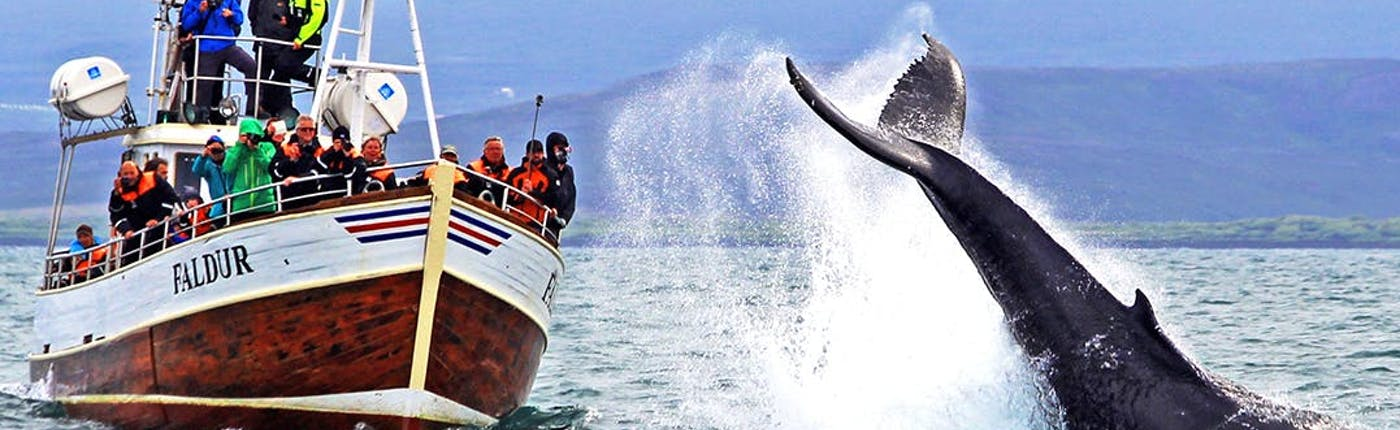 Whale watching tours take approximately three hours by boat.