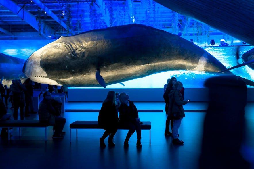 Whales of Iceland-Museum in Reykjavík