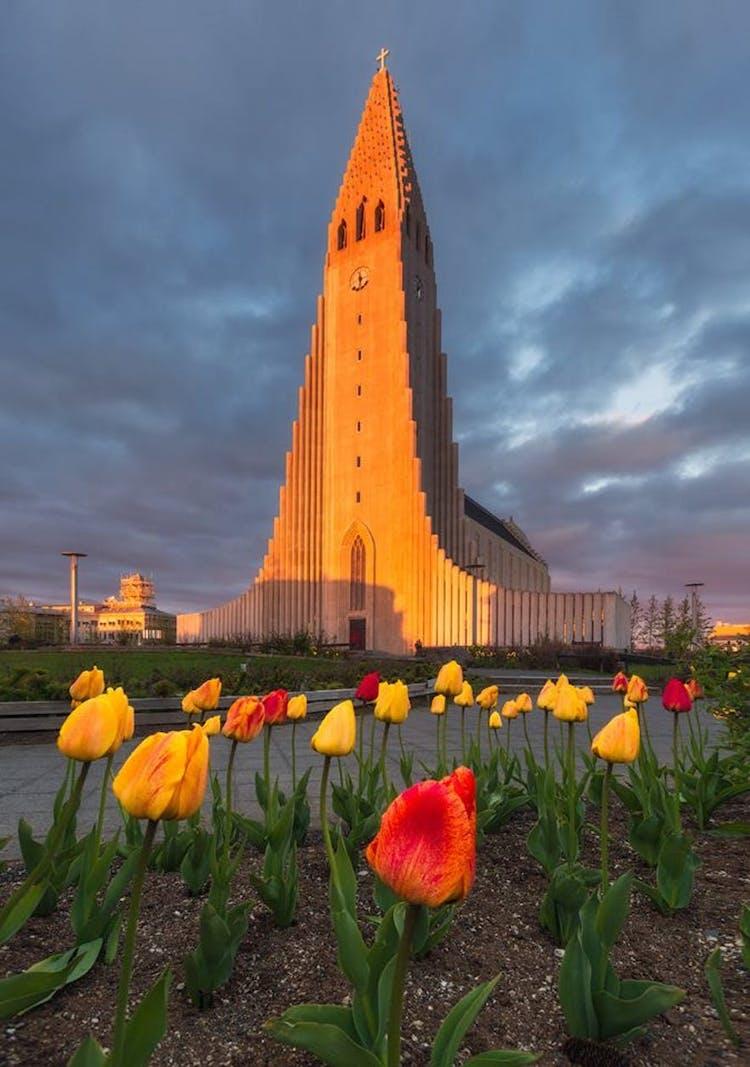 Reykjavík's treasured Hallgrímskirkja basks in the warm amber light of the Midnight Sun.