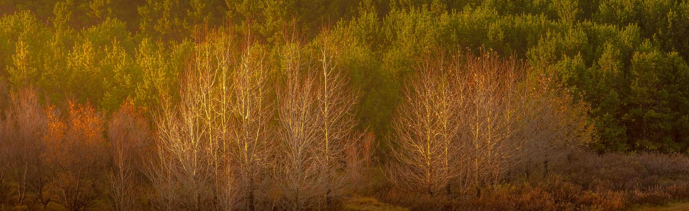 Autumn colours at Hvaleyrarvatn in October last year