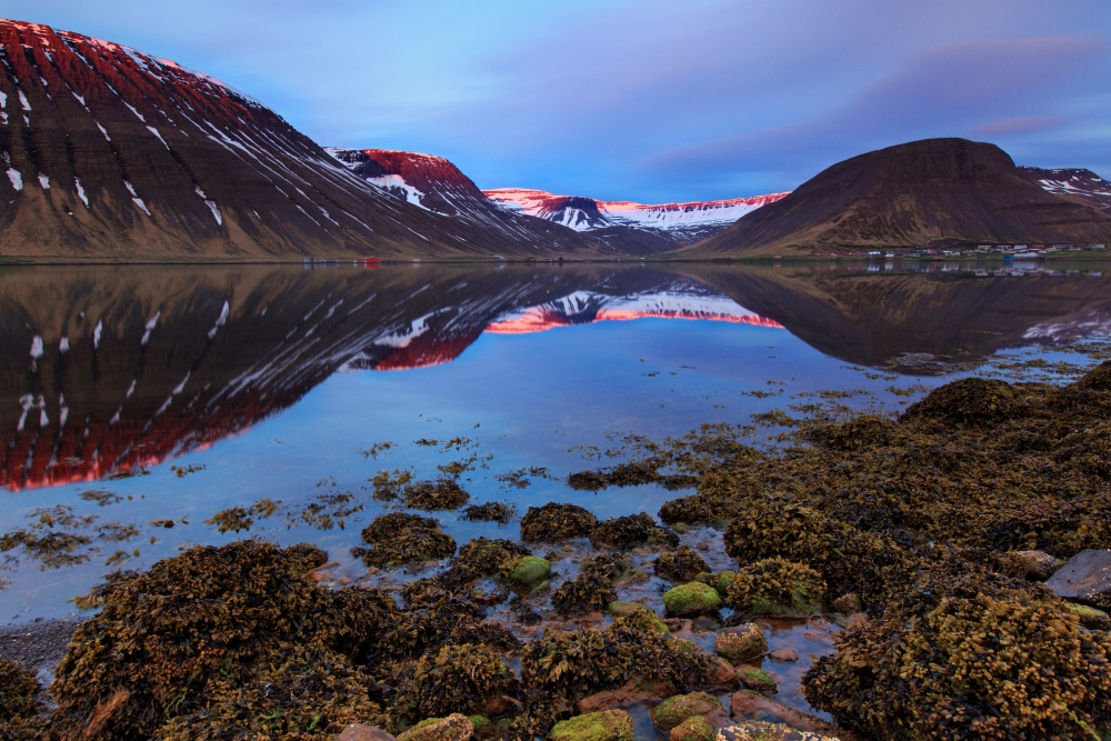 Although sparsely populated with people, the Westfjords is home to a large amount of wildlife.