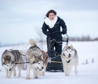 Dog Sledding with Husky on Snow | Akureyri, North Iceland