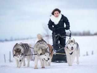 Husky Dogsledding | Akureyri, North Iceland