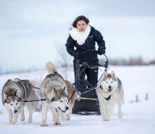 Slitta trainata dagli Husky   Akureyri, Islanda del Nord