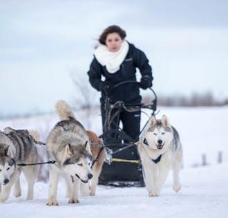 Traineau à chien dans le Nord   Départ d'Akureyri
