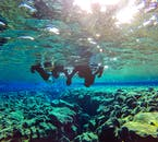 Snorkelling between the continents at Silfra fissure is an excellent activity to do with friends or a partner.