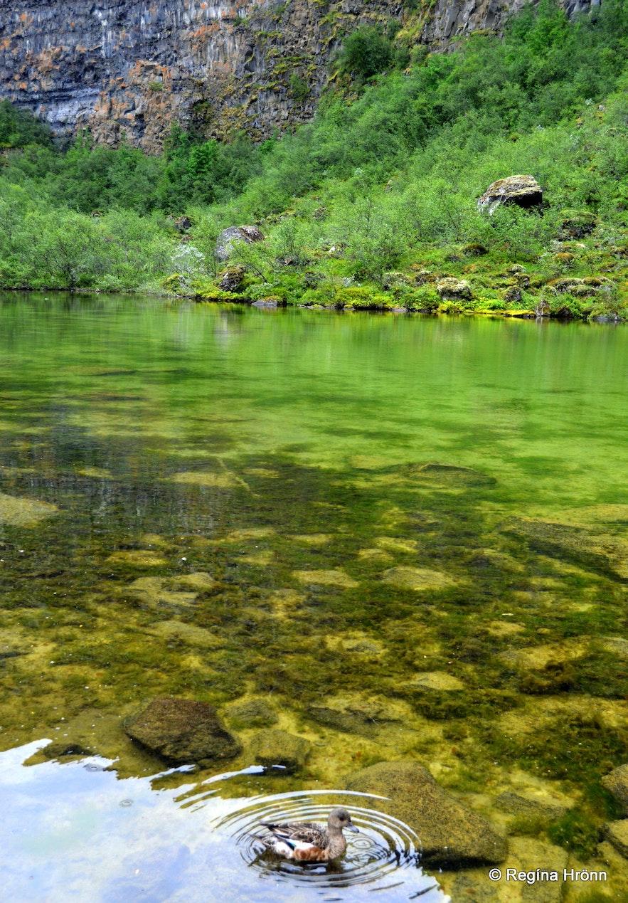 Botnstjörn pond at Ásbyrgi