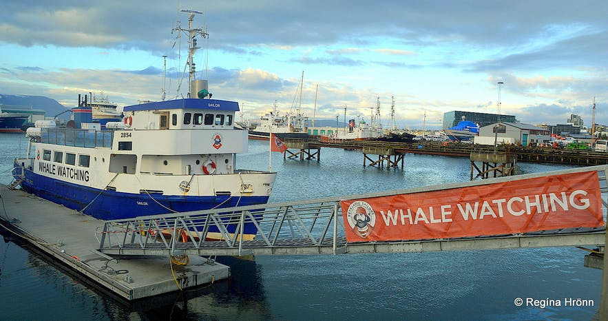 Whale Watching and Sea Angling from Reykjavík Harbour with Reykjavík Sailors