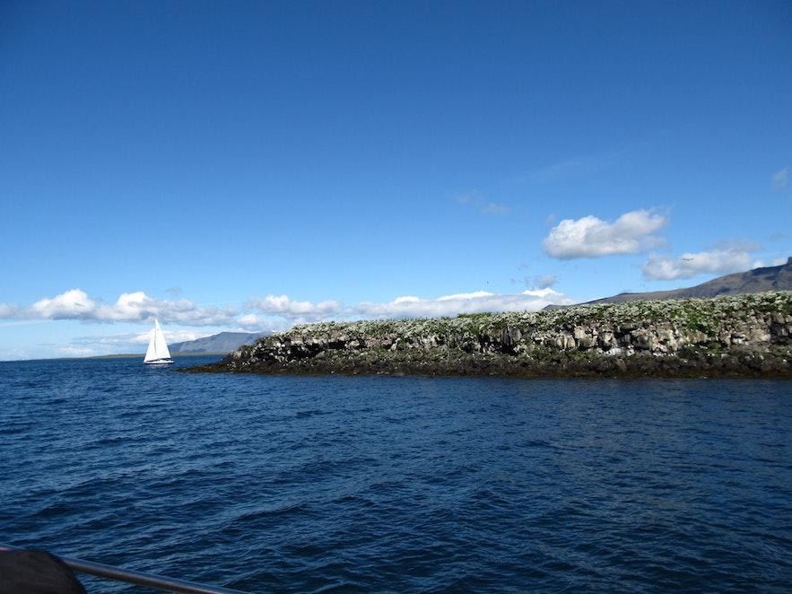 パフィンウォッチングツアーでは無人島とヨットも見られる