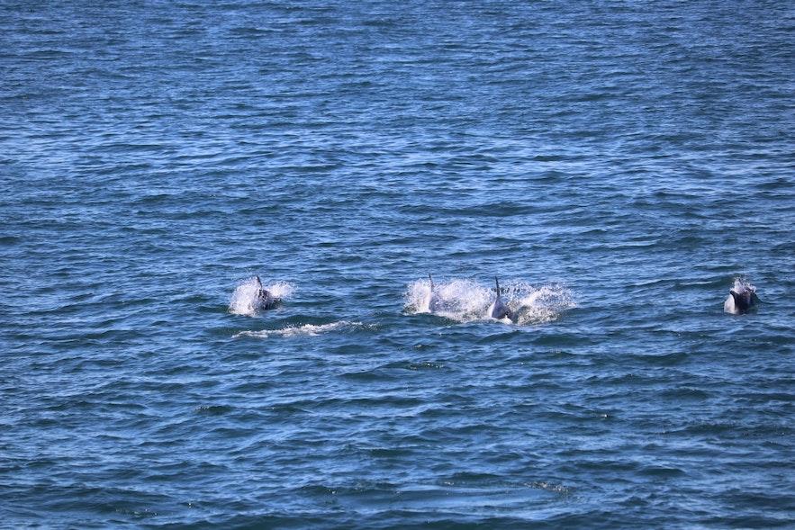 ホエールウオッチングツアー中に見られたクジラ