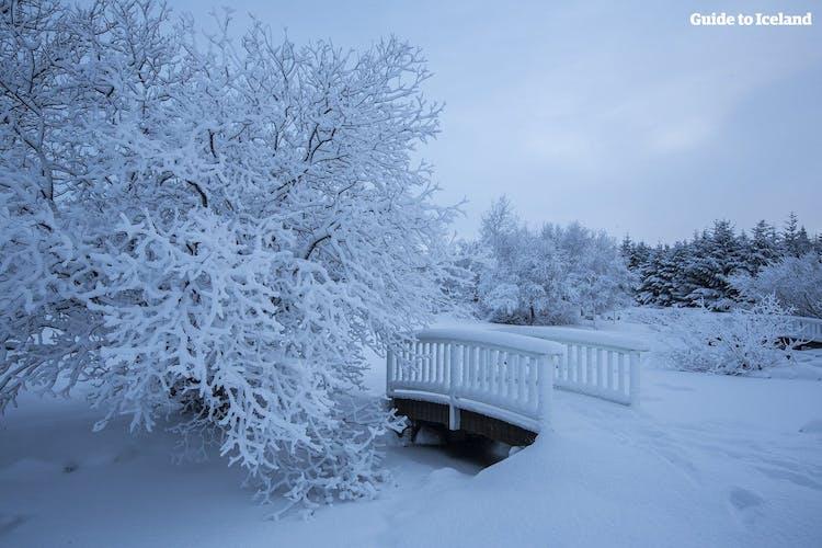 Das schneebedeckte Stadtzentrum von Reykjavík im Winter.
