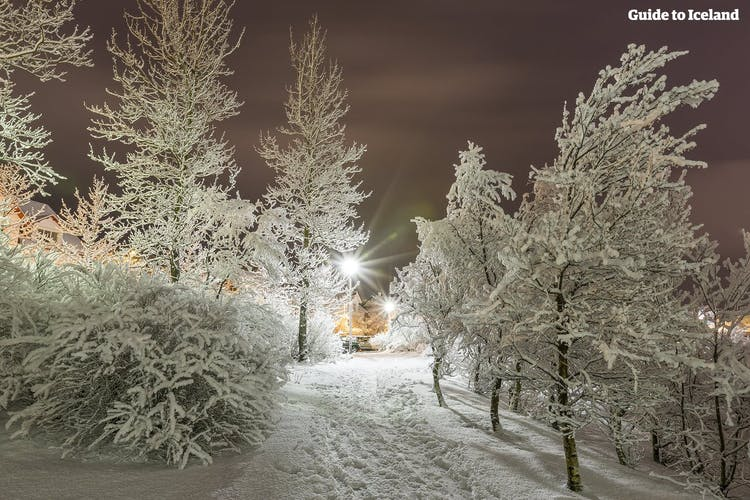 A snowy path in Reykjavík city.