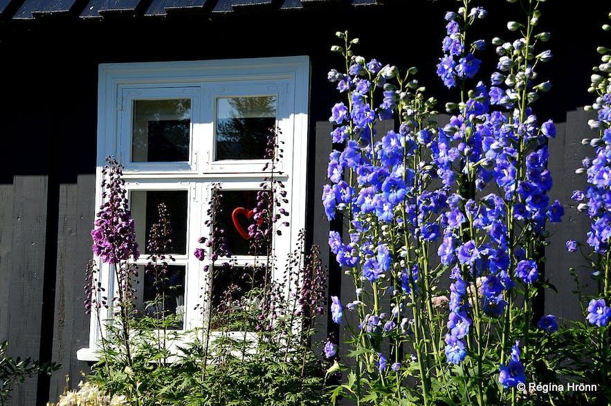 The beautiful Botanical garden in Akureyri -Lystigarður Akureyrar-
