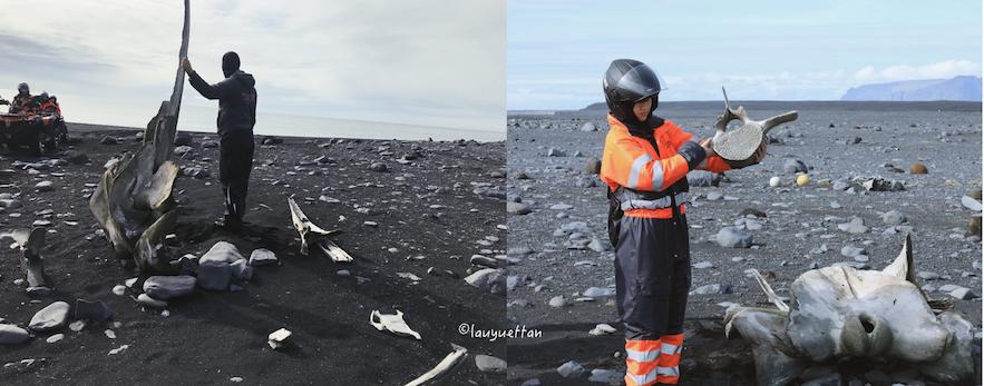 冰島鯨魚骸骨