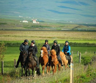 Horseriding Adventure | Meadows & Rivers of Skagafjordur Valley