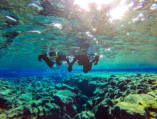Golden Circle & Snorkelling in Silfra | Free Underwater Photos & Small Group