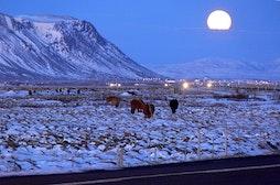 Selfoss (pueblo)