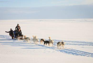 Hundeschlitten-Tour   Treffpunkt vor Ort (nahe Reykjavík)