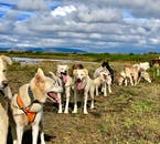 Dog Sled Tour With Transfer Service from Reykjavik