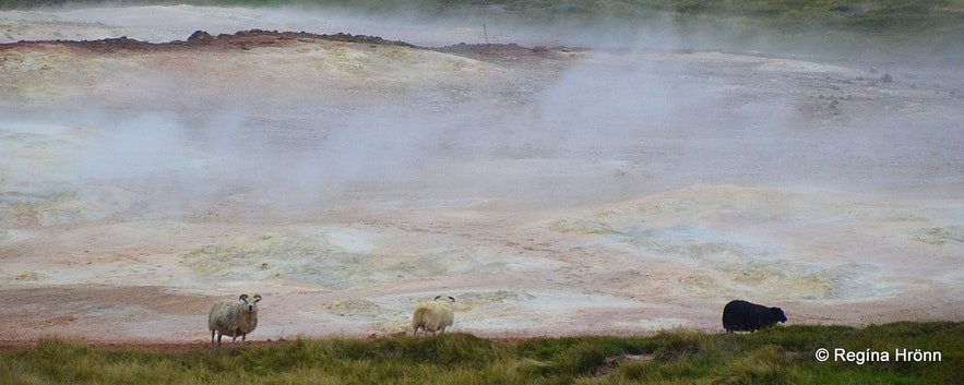 The colourful Þeistareykir Geothermal Area in North-Iceland