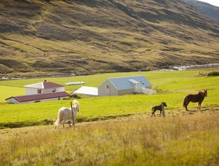 The Shepherd's Path | East Iceland Hiking Tour
