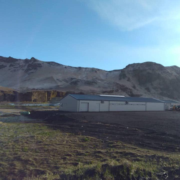 アイスランドのブラックサンドビーチの近くにあるホースファーム