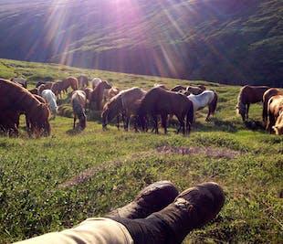 エイイルスタジル発|ホーストレッキングとアイスランド東部の名瀑