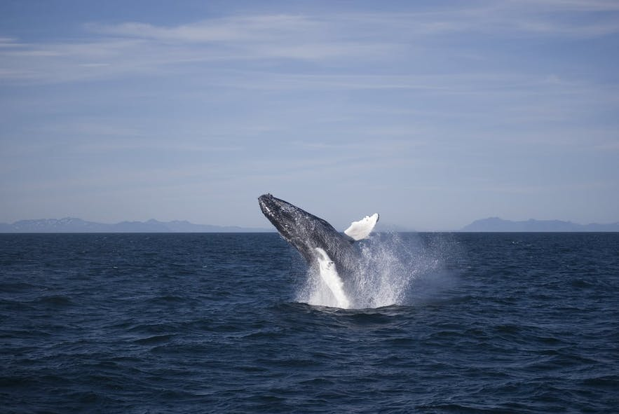 Many whale watching tours can accommodate guests in a wheelchair, but remember to call ahead